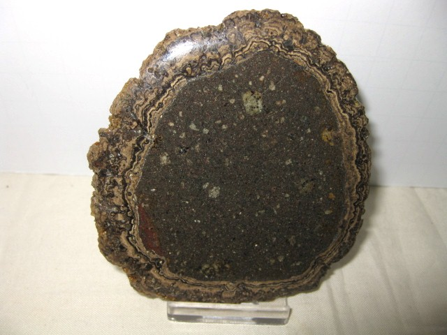 Fossil Cretaceous Age Freshwater Stromatolite from Mexico