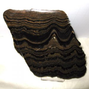 Fossil Precambrian Age Stromatolite from Cochabamba, South America