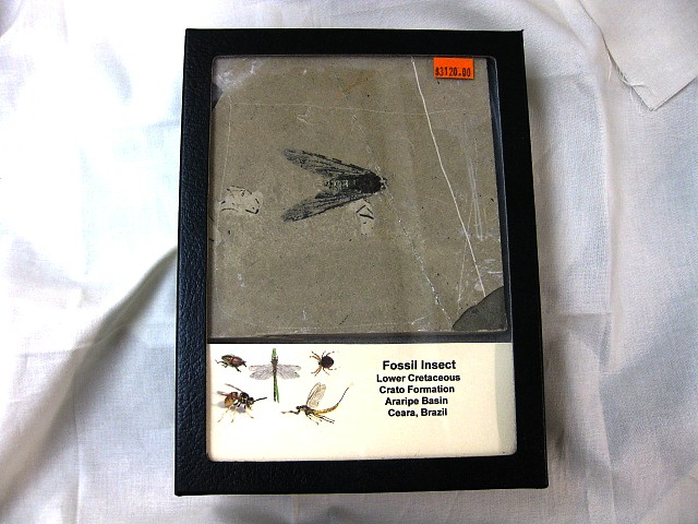 Fossil Crato Formation Insect from Brazil