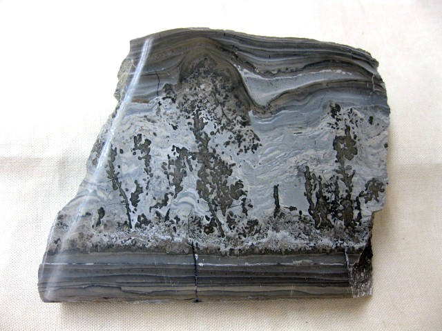 Triassic Age Cotham Marble Stromatolite from England
