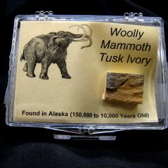 Woolly Mammoth Tusk Ivory #1