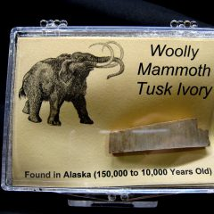Woolly Mammoth Tusk Ivory #2