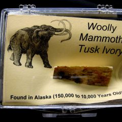 Woolly Mammoth Tusk Ivory #5