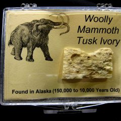 Woolly Mammoth Tusk Ivory #6