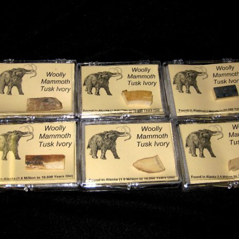 Mammoth Ivory Boxes