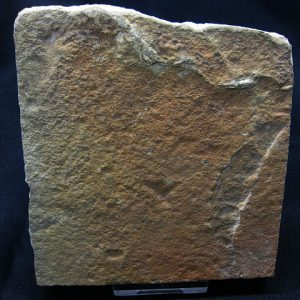 Eocene Age Reptile Skin Fossil from The Green River Formation of Utah