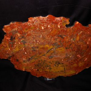 Triassic Age Araucaria Petrified Wood Fossil from Arizona