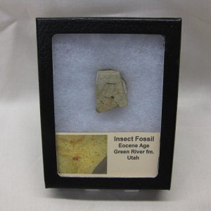 Eocene Age Fossil Insect from the Green River Formation of Utah