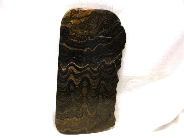 Fossil Freshwater Stromatolite from Bolivia South America