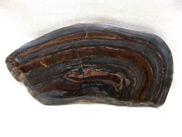 Fossil Precambrian Age Banded Iron Stromatolite from Michigan
