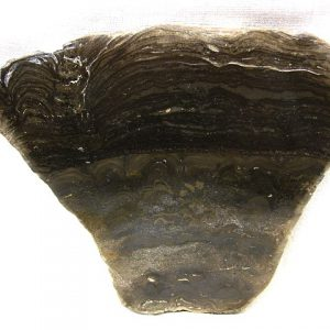 Fossil Ordovician Cryptozoon Stromatolite from Herkimer County New York