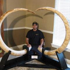Fossil Pleistocene Age Matching Pair of Mammoth Tusks from Alaska