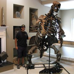 Fossil Pleistocene Age Megalonyx Giant Ground Sloth from Missouri