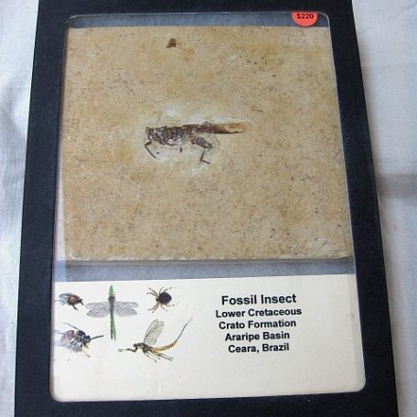 fossil cretaceous age insect from the crato formation of south america