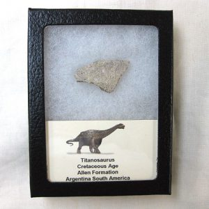Fossil Cretaceous Age Titanosaurus Dinosaur Egg Shell from South America