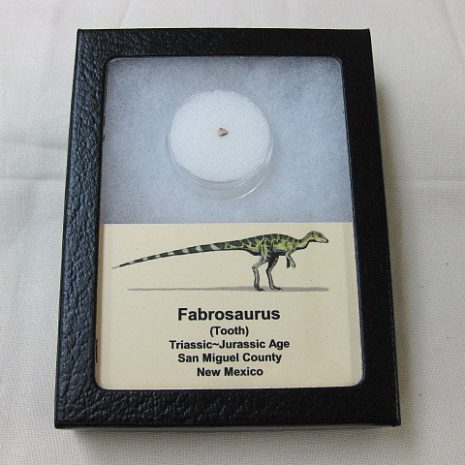 Fossil Triassic~Jurassic Age Fabrosaurus Dinosaur Tooth from New Mexico
