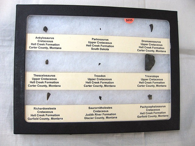 Fossil Cretaceous Age Dinosaur Tooth Collection