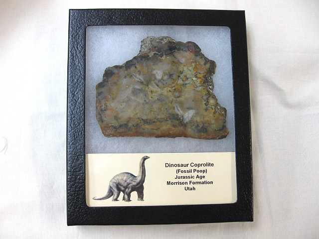 Fossil Jurassic Age Dinosaur Coprolite (Poop) Slice from The Morrison Formation of Utah
