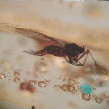 Baltic Amber with Insect Inclusions from Russia
