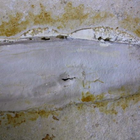 Fossil Jurassic Age Squid from the Solnhofen Limestone of Germany