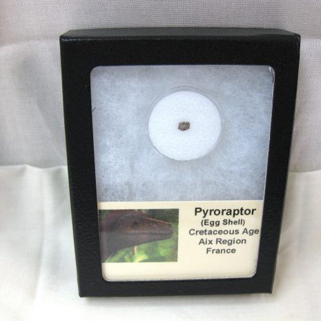 Fossil Cretaceous Age Pyroraptor olympius Dinosaur Egg Shell from France