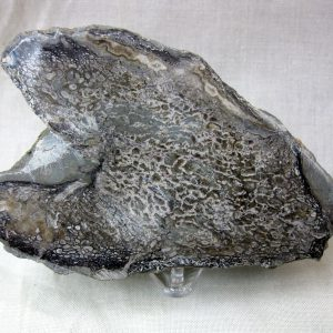 Fossil Cretaceous Age Polished Dinosaur Bone from North Africa