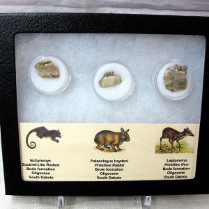 Fossil Oligocene Mammals from the Brule Formation of South Dakota